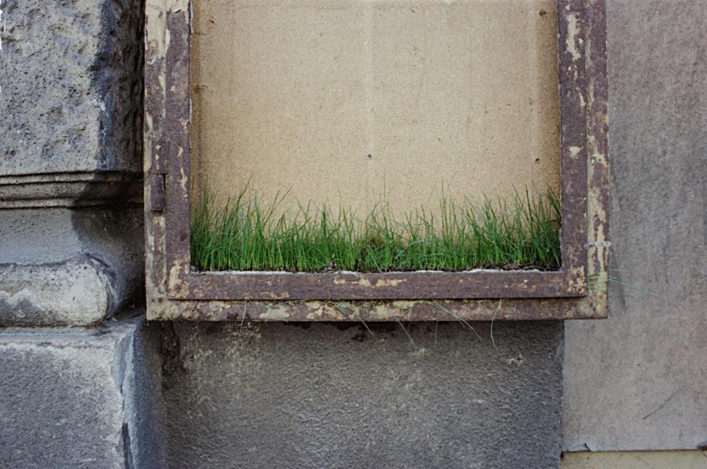 Garden_Markus Konecny